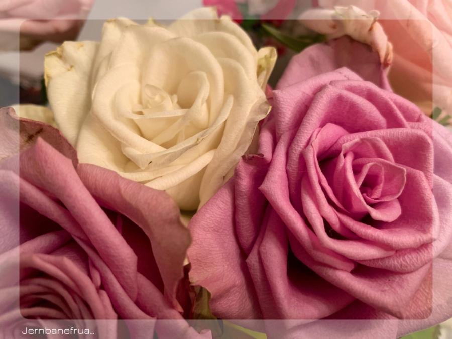 rosebukett