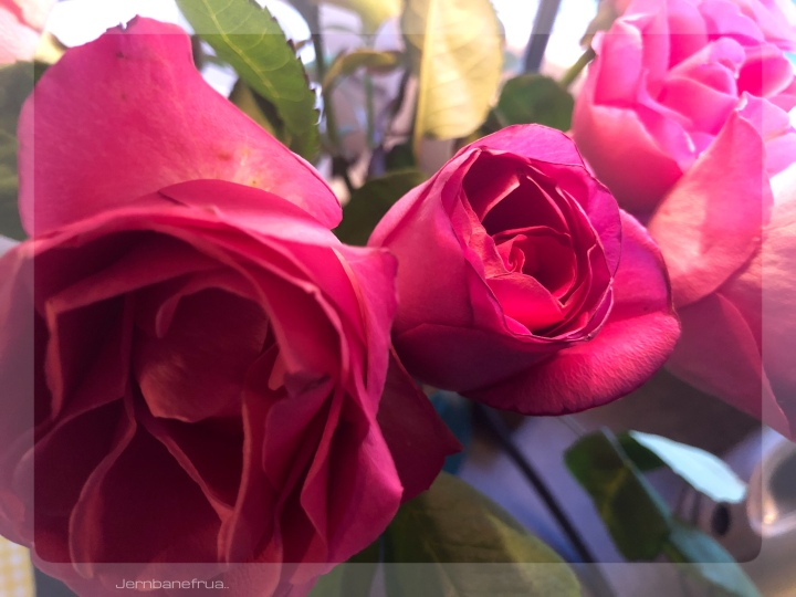 Jernbanefruas roser.
